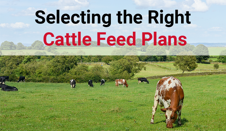 Selecting the Right Cattle Feed Plans | Arrowquip
