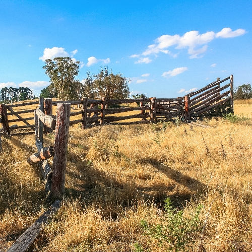 Homemade wooden cattle yards in a field