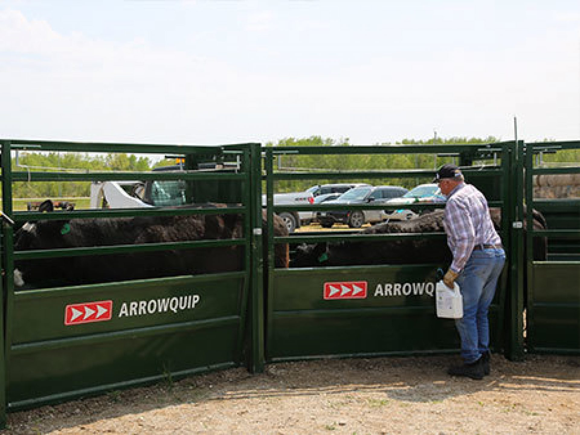 Managing Cattle With Easy Flow Alleys