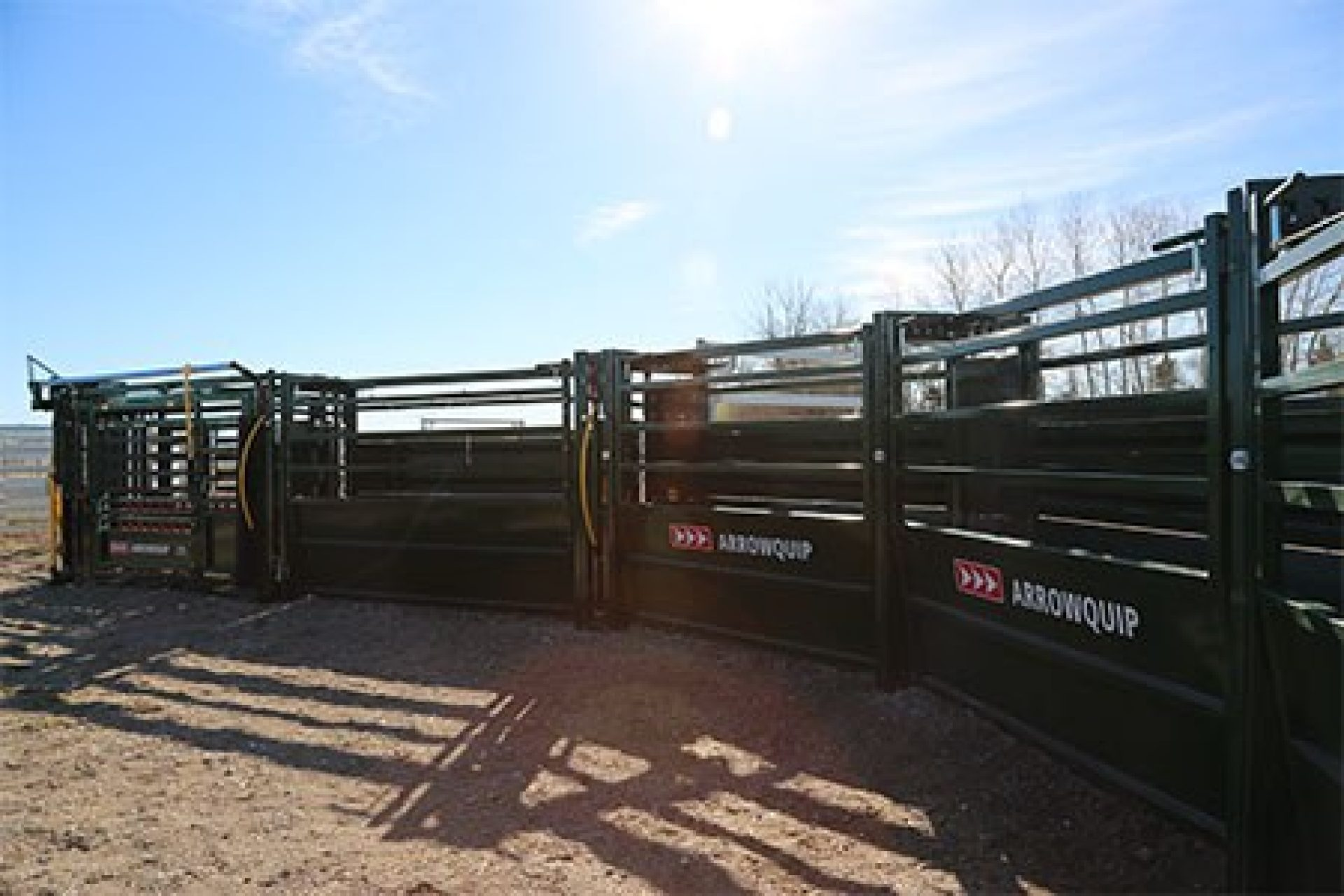 Curved Cattle Alley System Leading To A Chute