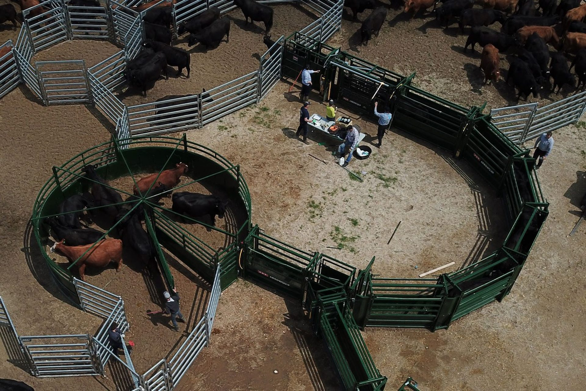 Overhead view of cattle working system with S-Flow cattle tub and alley and ranchers working livestock