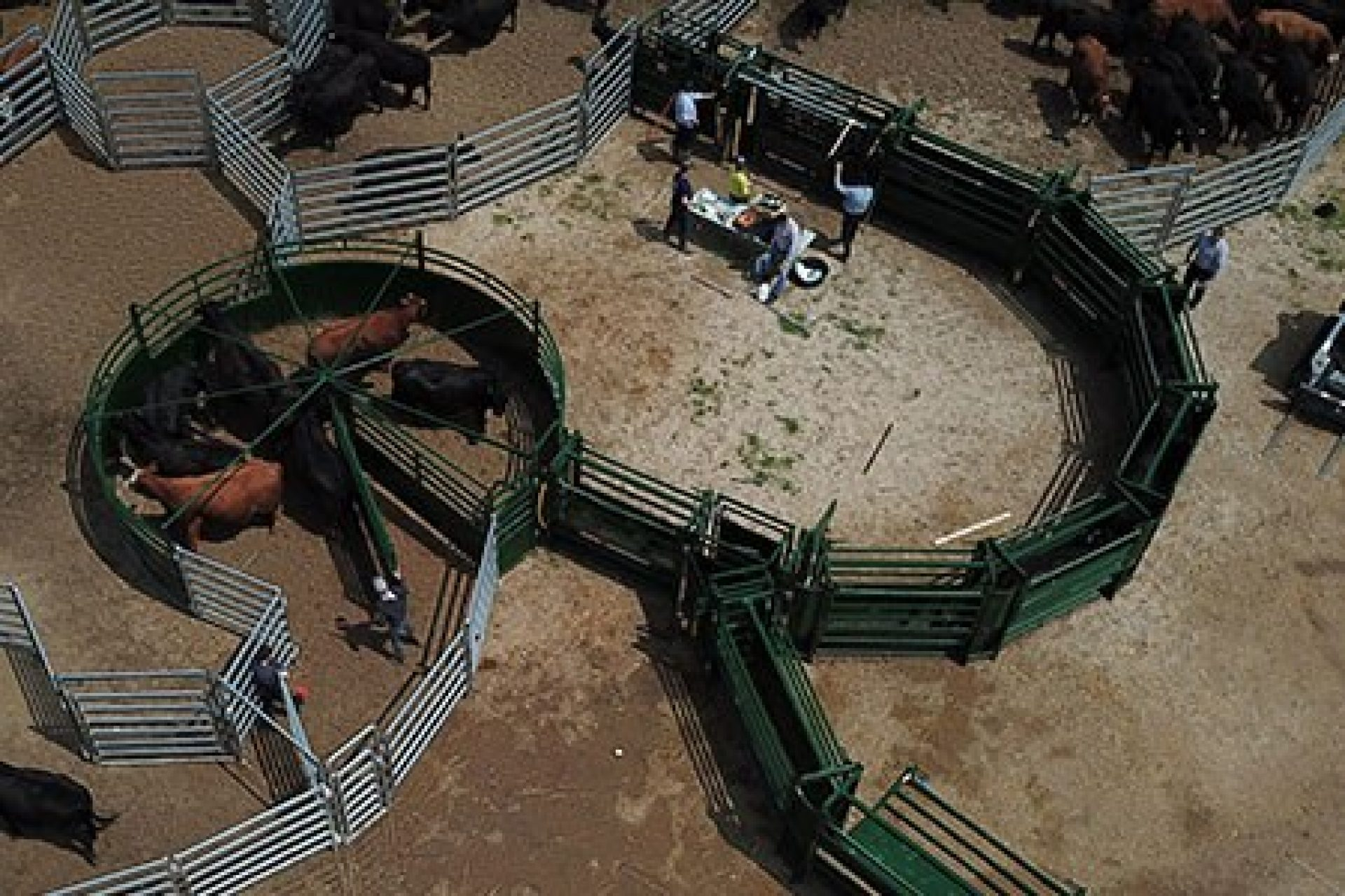 Aerial Shot of Full Cattle Working System