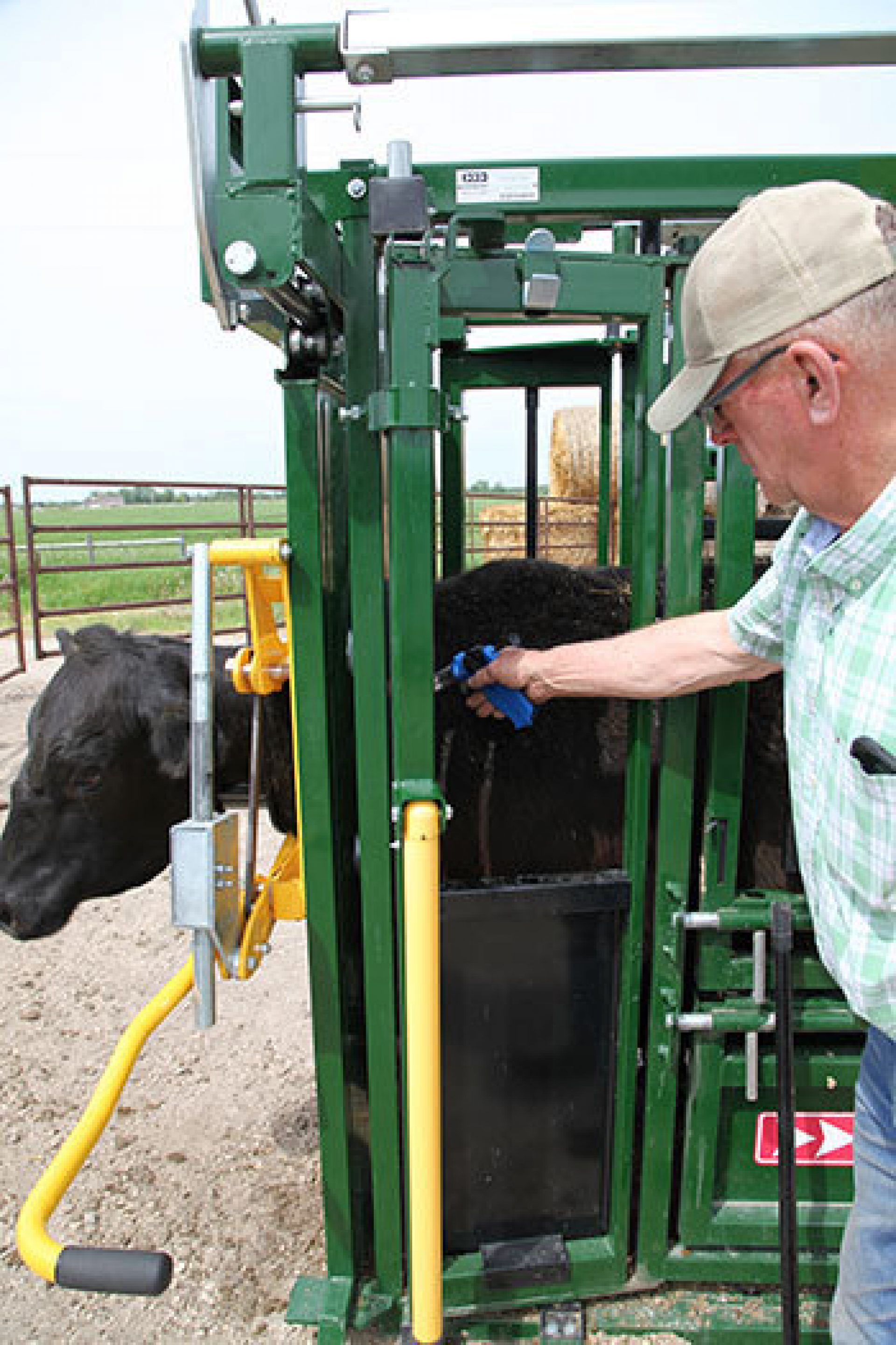 Vaccinating a cow