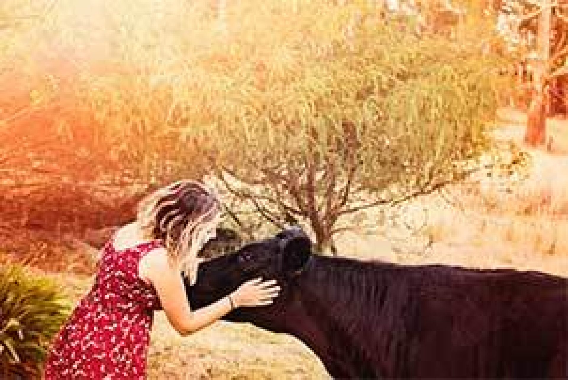 Cow With Girl