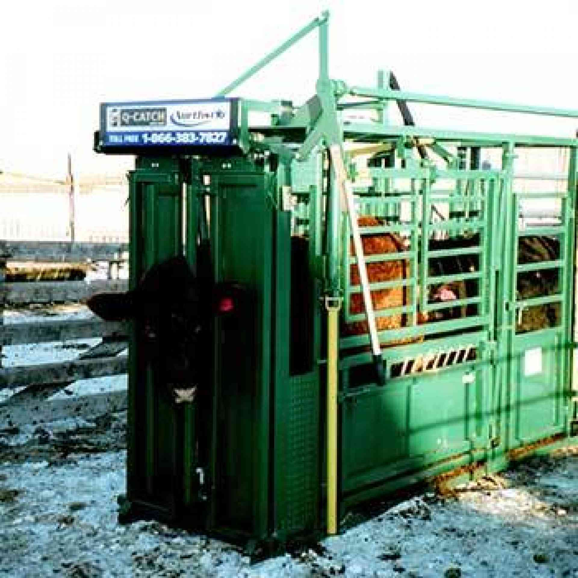 Cattle Immobilizer