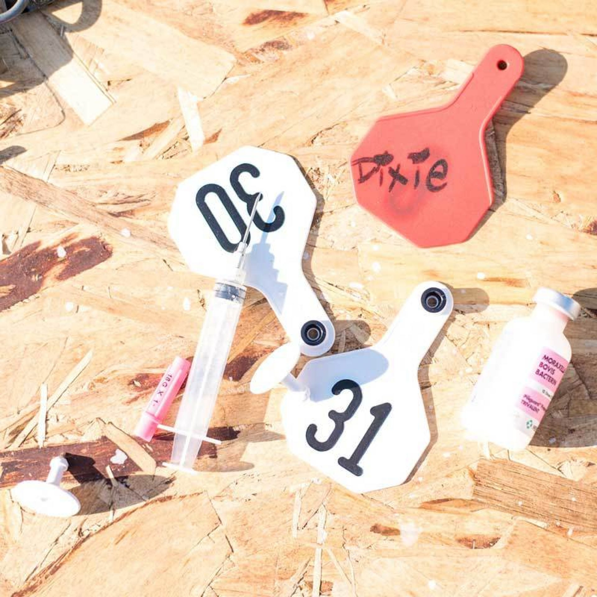 Cattle ear tags and vaccines on plywood board