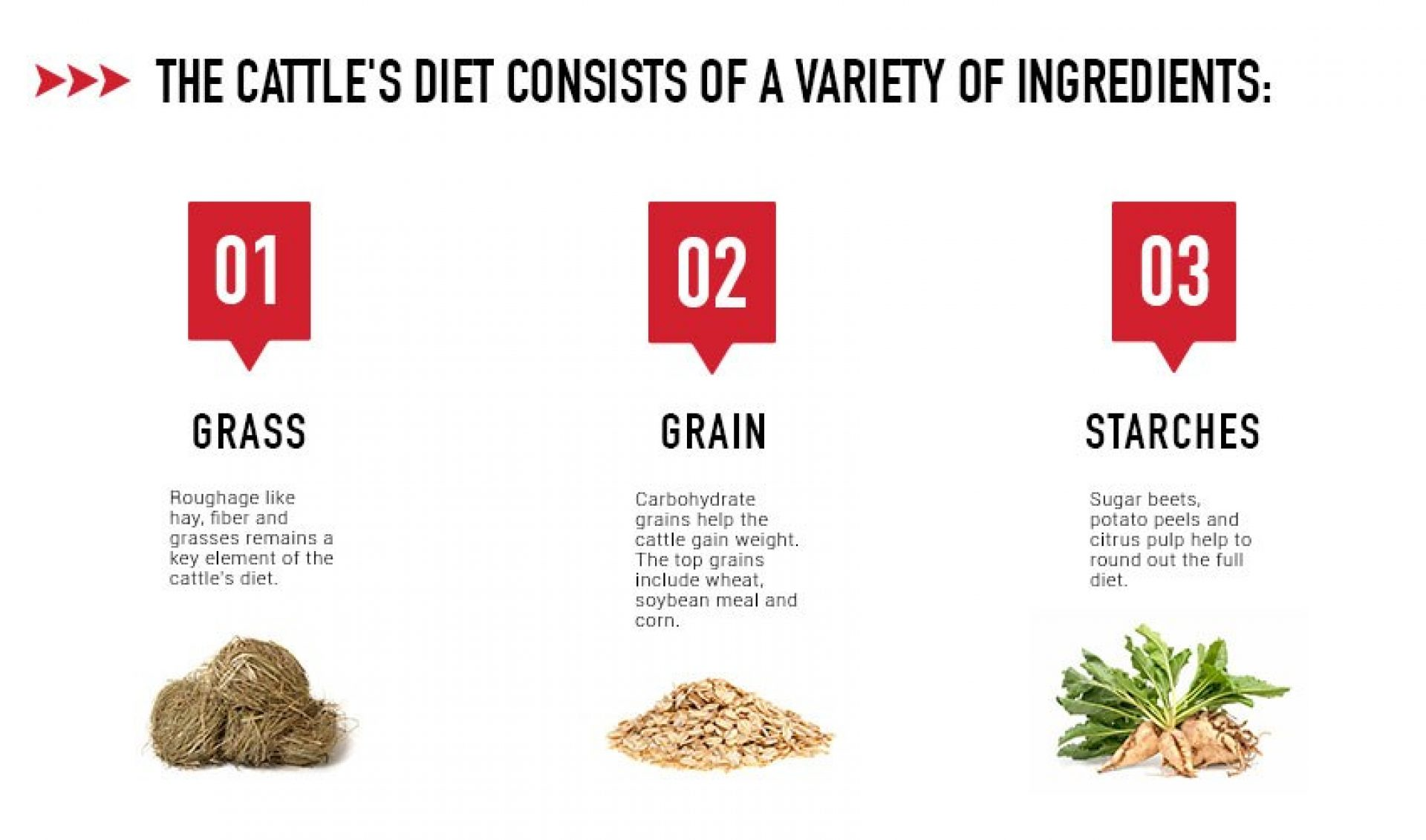 Cattle Diet