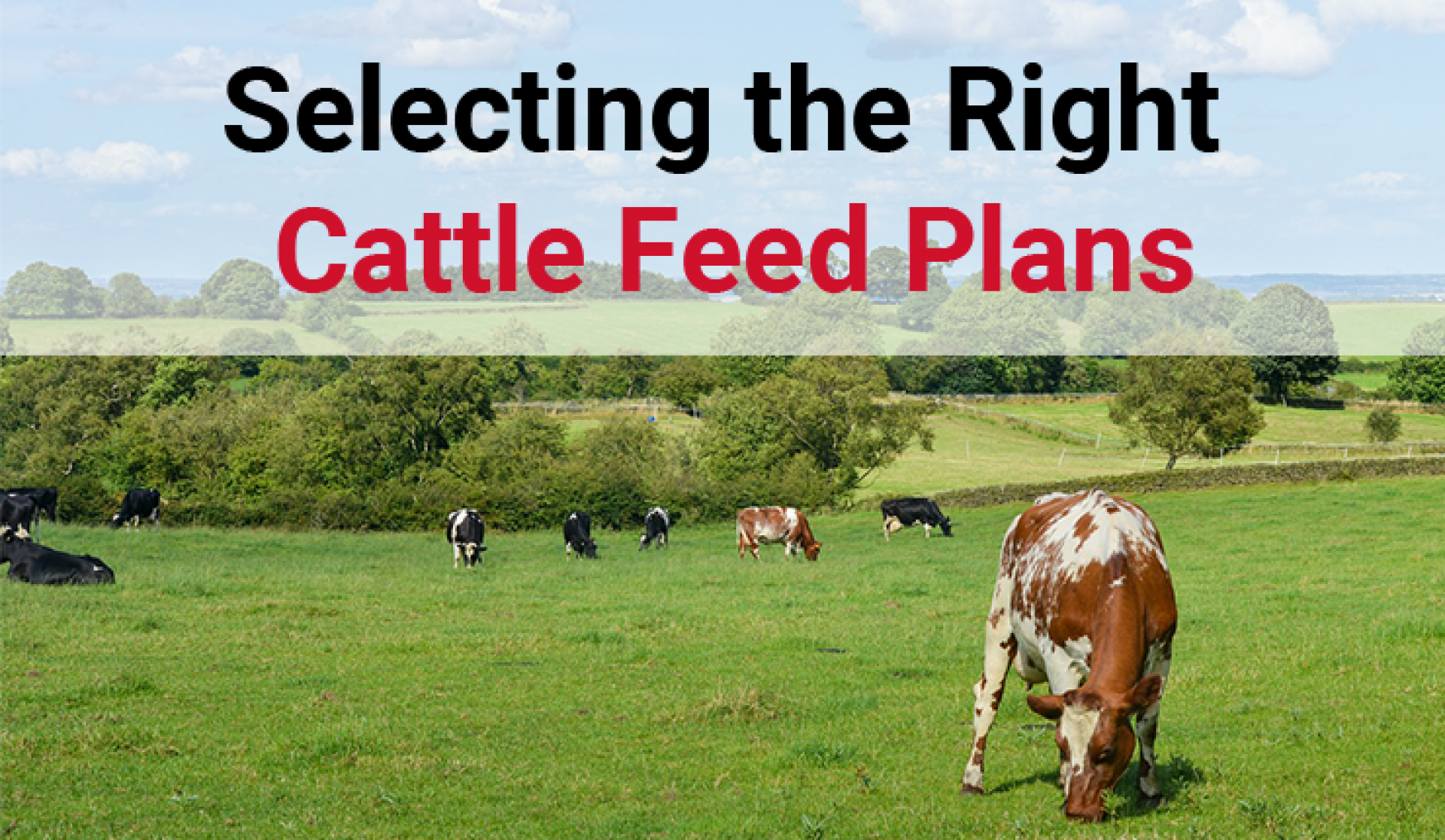 Cattle Feed Plans