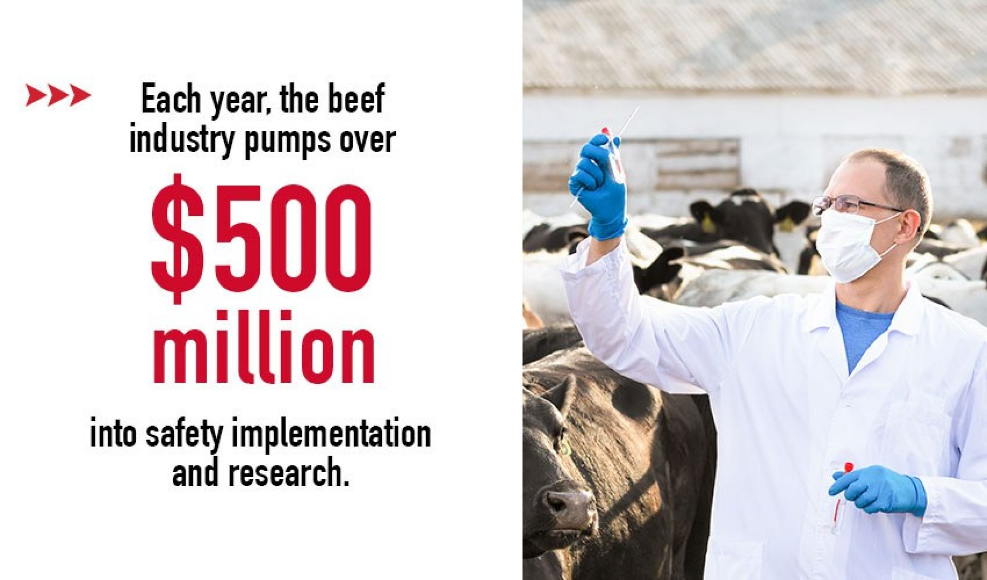 Beef Industry Cattle Research