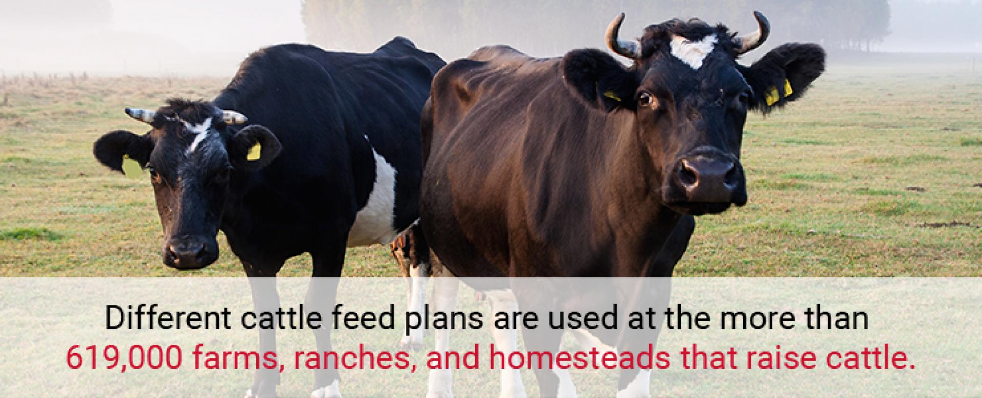 Farm Feed Plans