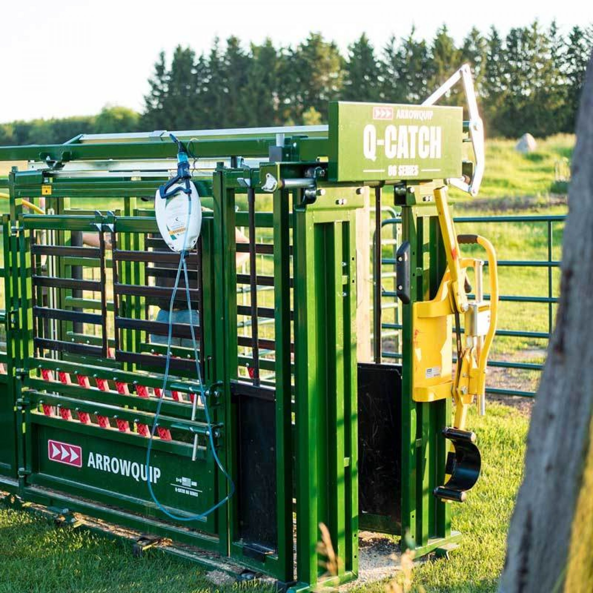 Q-Catch Cattle Chute with Head Holder