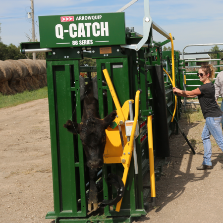 Dana Charban, Manager of Content Strategies and Journalist for Arrowquip, catching black cow in Q-Catch 86 Series cattle chute