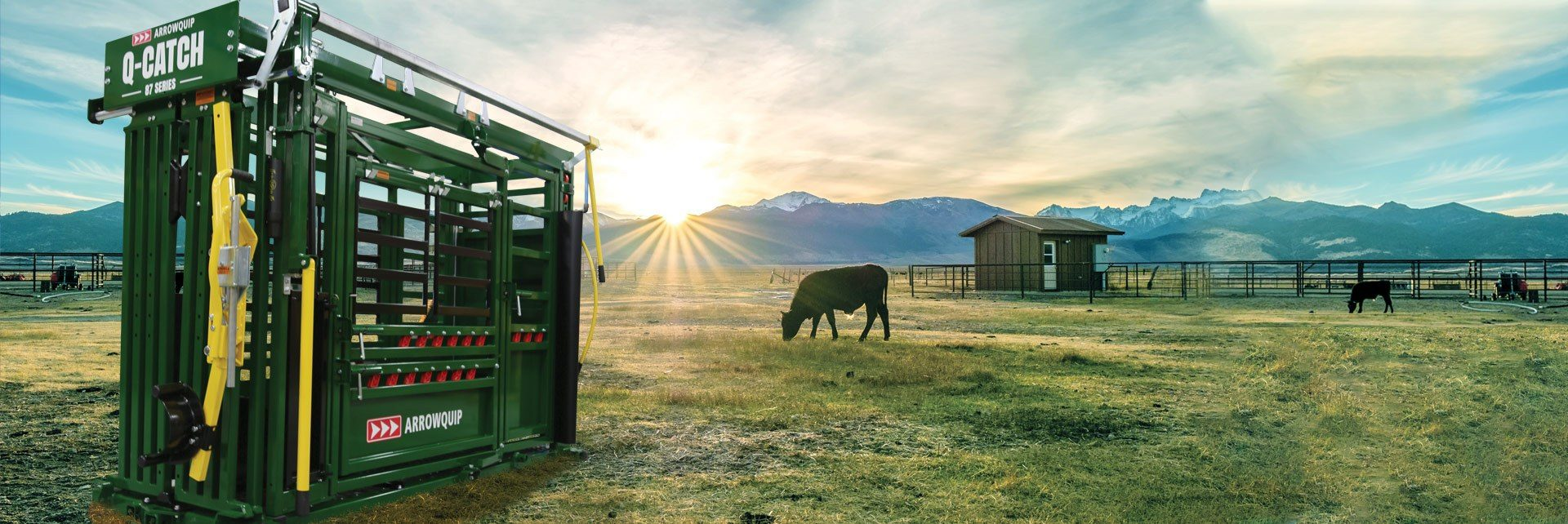 Q-Catch 87 Series cattle chute in a field with cattle