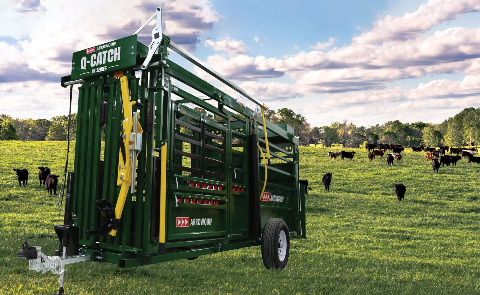 Q-Catch 87 Series portable cattle chute and alley sitting in field with cattle