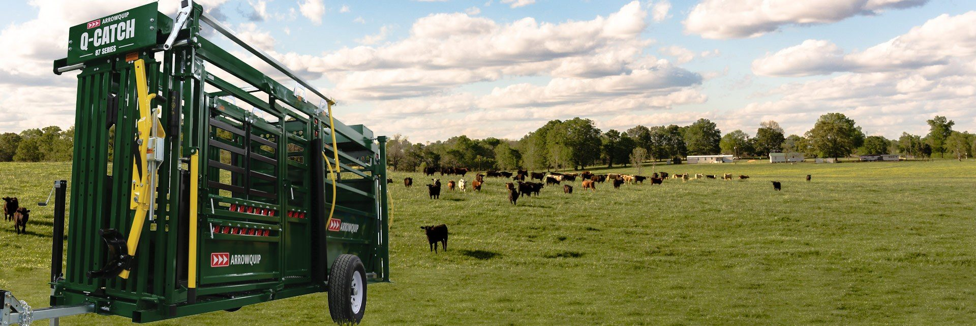 Arrowquip's portable cattle chute and alley in a field with cows