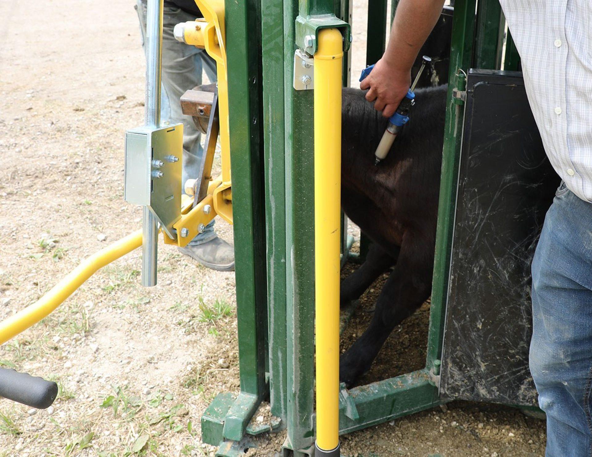 Calf neck access 87 series