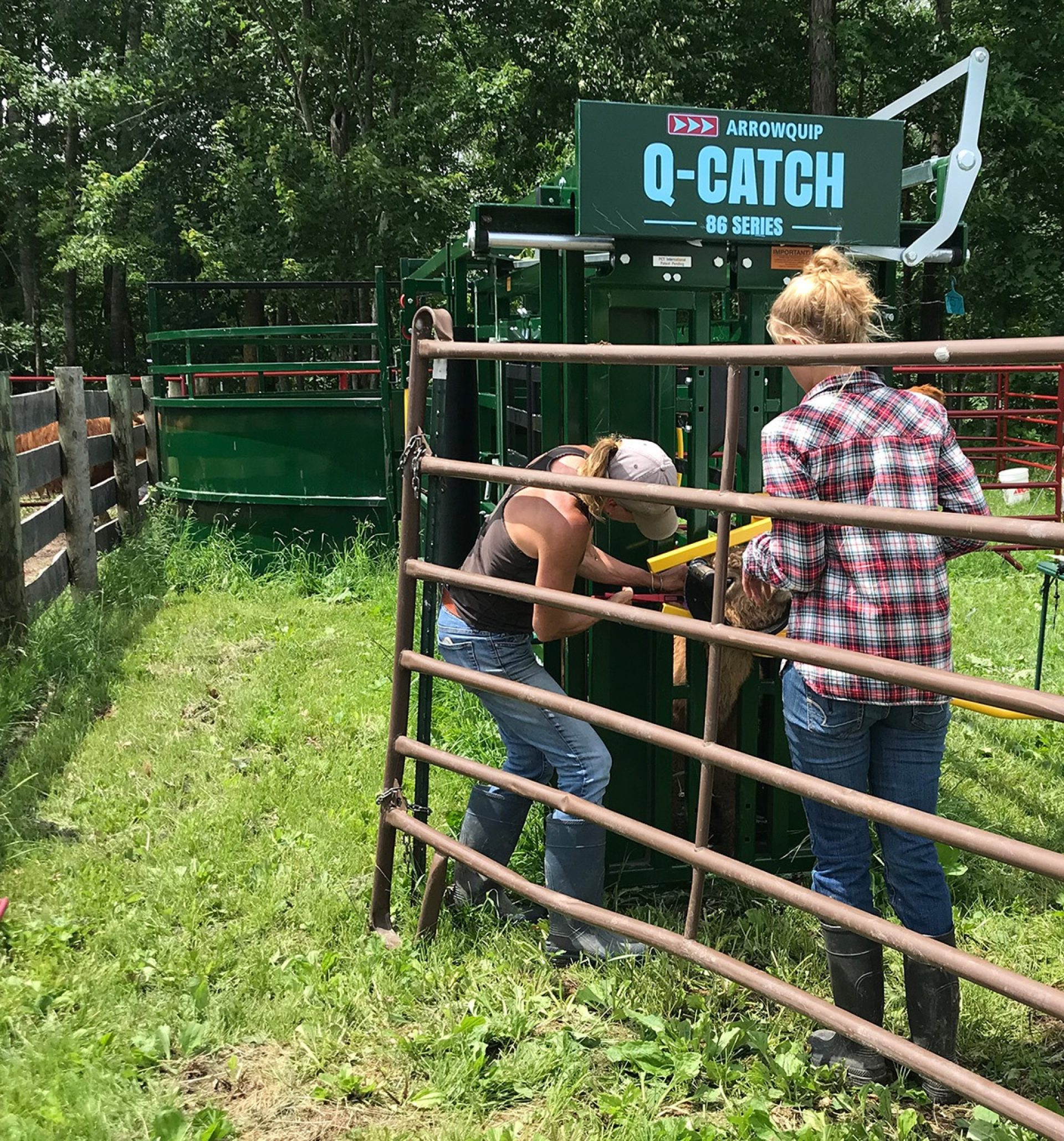 Working Cattle Chute