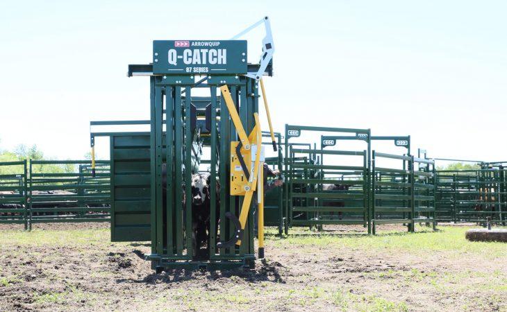 3E Q-Catch Yoke Gate on Cattle Crush