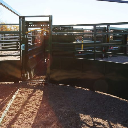 3E System using Cattle Forcing Tub with Cattle looking out.