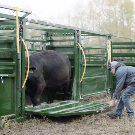 drop down cattle alley emergency gate