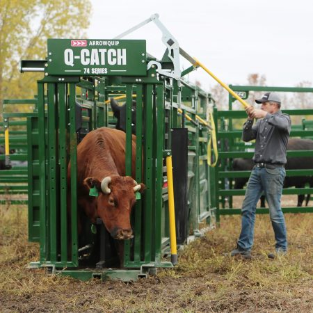 Rancher operating the Q-Catch cattle head gate handle.