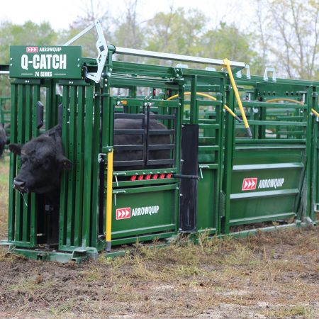 portable cattle handling system with a bull inside the cattle chute