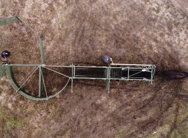 above image of portable cattle handling system fully set up