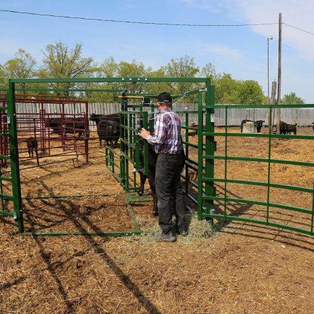 Calving Pen Back Access Farmer2