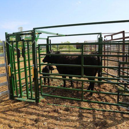 Calving Pen Cow Calf