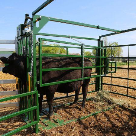 Calving Pen Cow Side Access2A