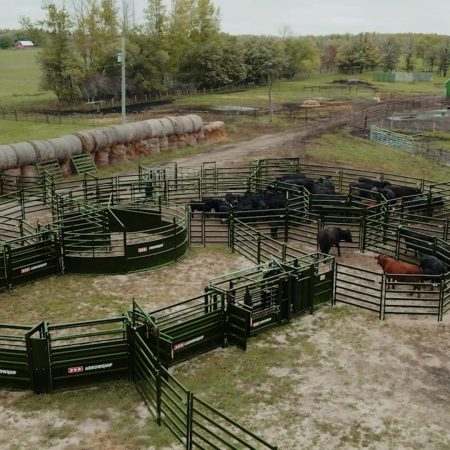 Drone shot of cattle handling system with BudFlow cattle tub and manual squeeze chute