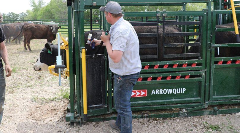 Needle Access on Cattle Chute