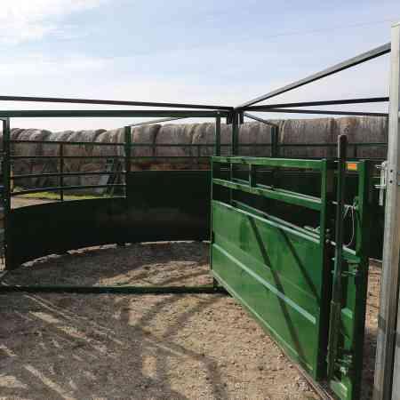 Vue de bovins entrant dans un enclos pivotant