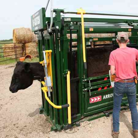 Working Cattle Spray Side Access