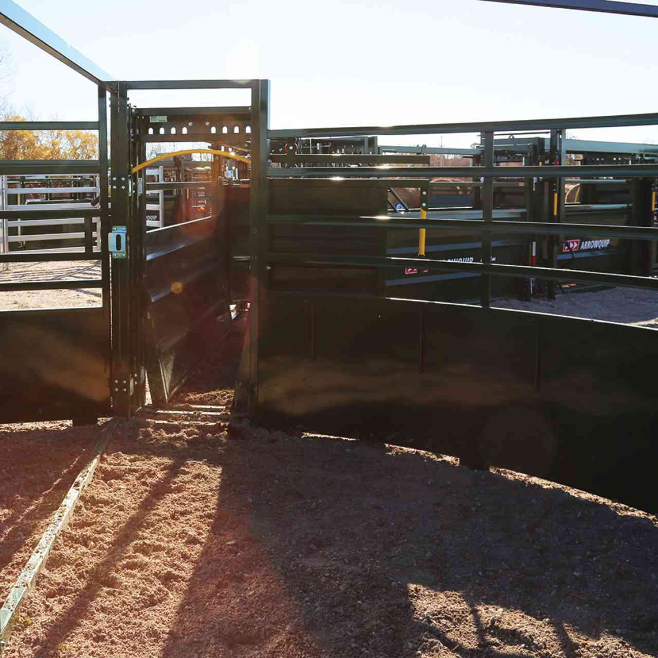 Low sheeted cattle tub panels bring more light into the handling system