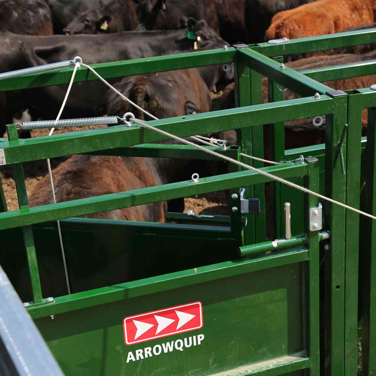 Close-up view of spring loaded cattle drafting gate doors