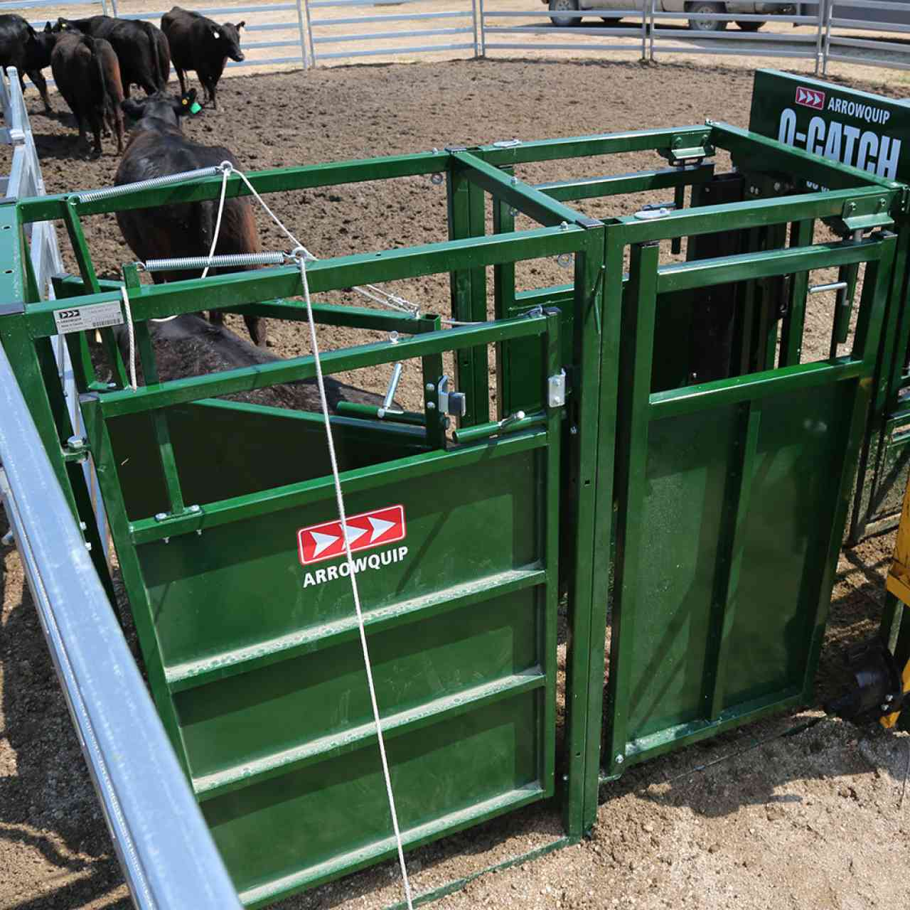 Top view of cattle drafting gates