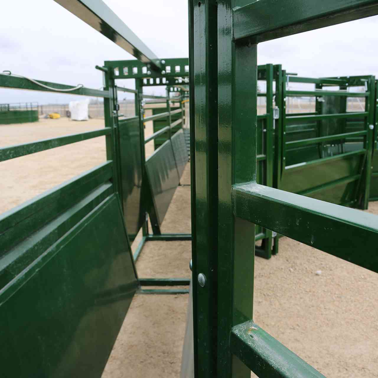 Inside view of adjustable cattle alley from inside cattle squeeze chute