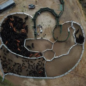 Drone shot of custom cattle handling system design with Arrowquip equipment