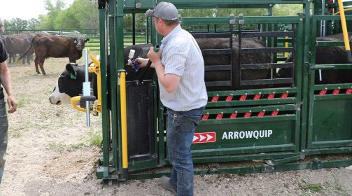 Needle Access on Cattle Chute