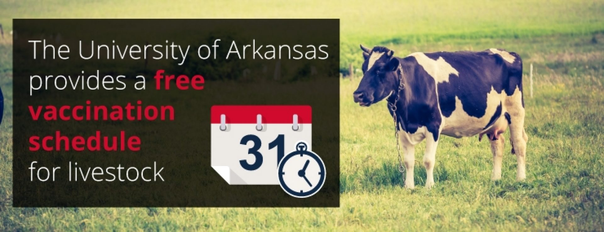 The University of Arkansas provides a free vaccination schedule for livestock.