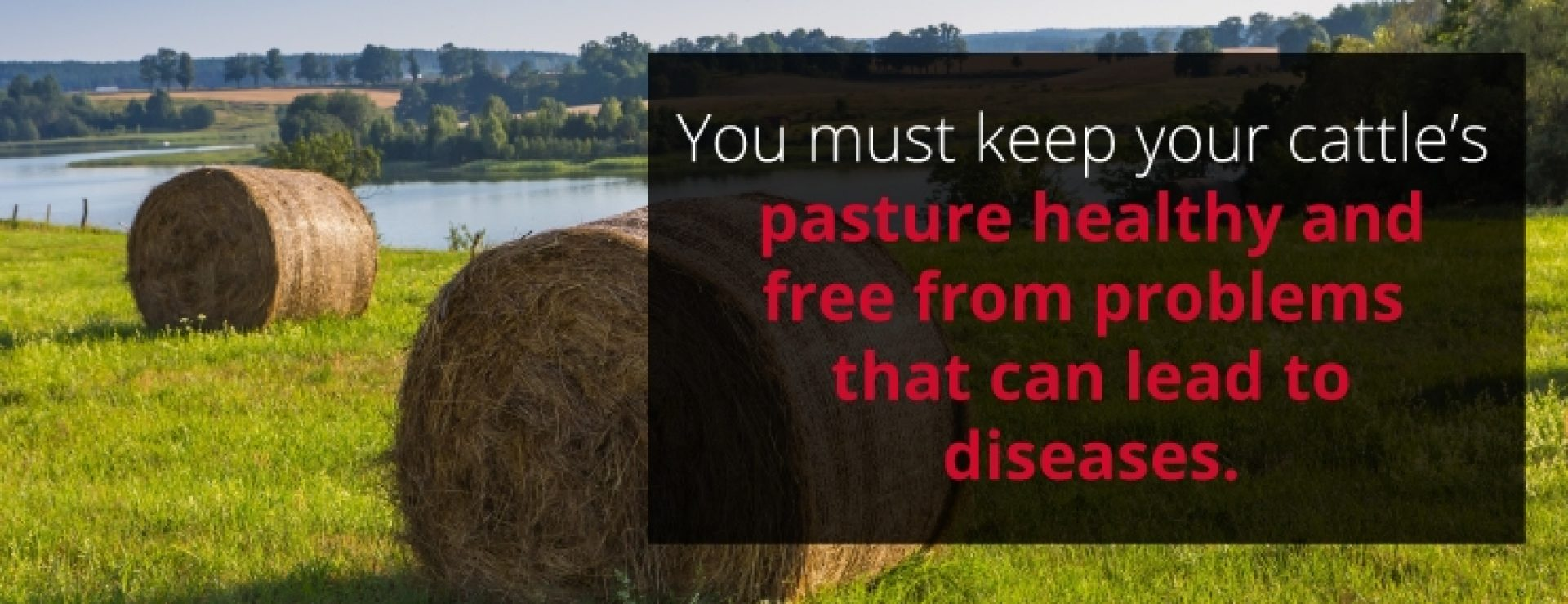 Keep a clean pasture