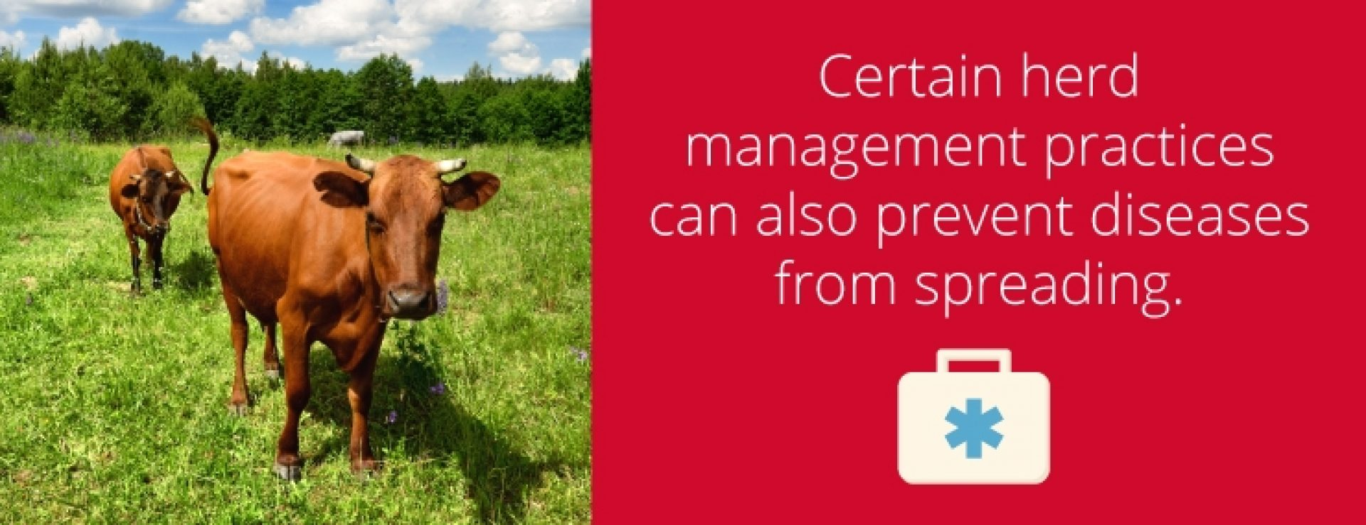 Cattle Herd Management Practices image