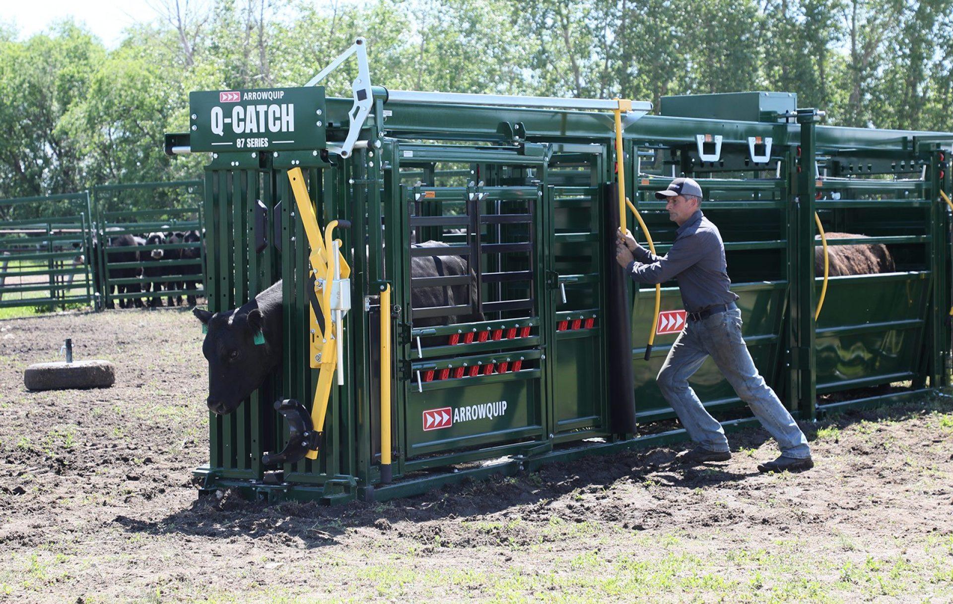 Proper Cattle Head Catch location in Q-Catch 87 Series portable cattle chute