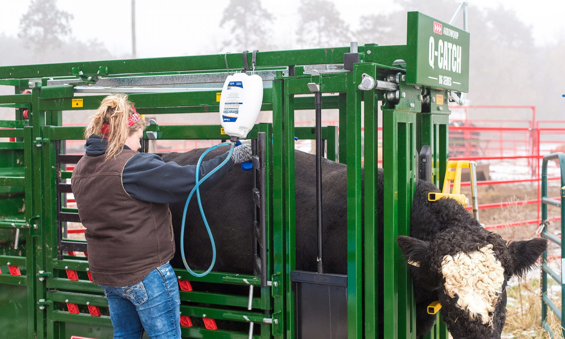 Cattle rancher, Danielle Kristine Dykes, treating cow in Q-Catch 86 Series squeeze chute