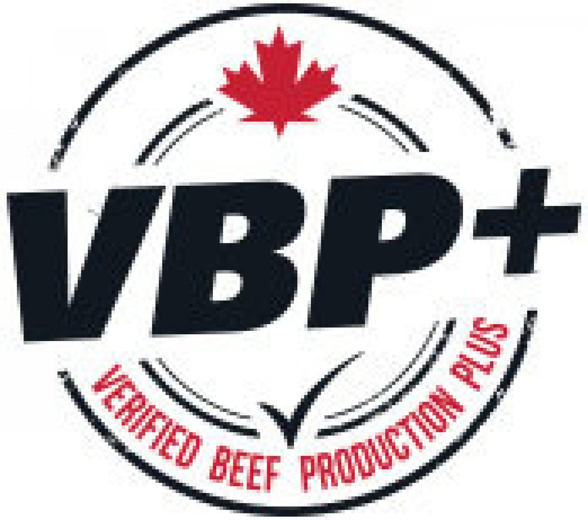 Vbp Logo