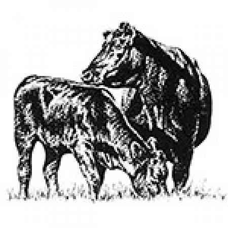 7 L Cattle Equipment